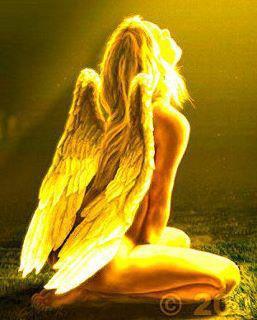 angel8