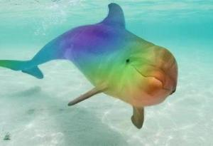 An Entire Philharmonic Orchestra  Rainbowdolphin
