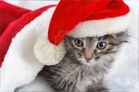 ChristmasKitten