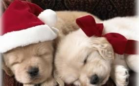 ChristmasPuppies