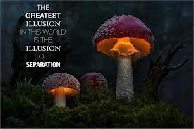 SeparationIllusion