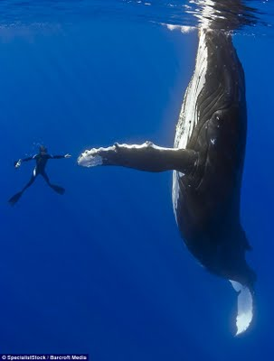 08e67-whale-diver